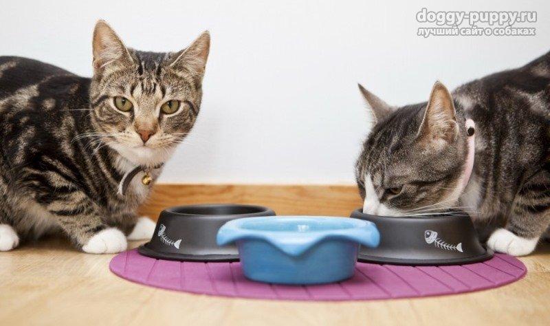 Почему кошка закапывает миску?