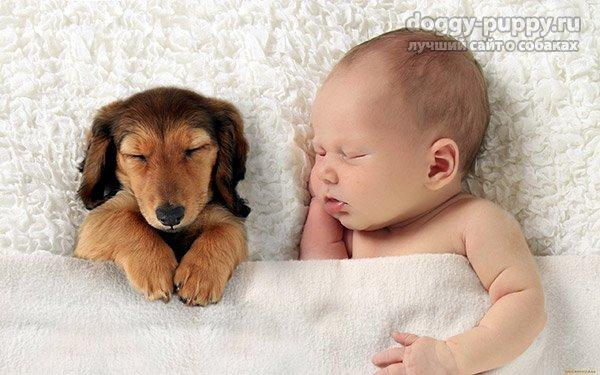 Новорожденный и домашние животные: полезные советы