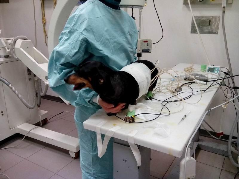 Оперативная ветеринарная хирургия