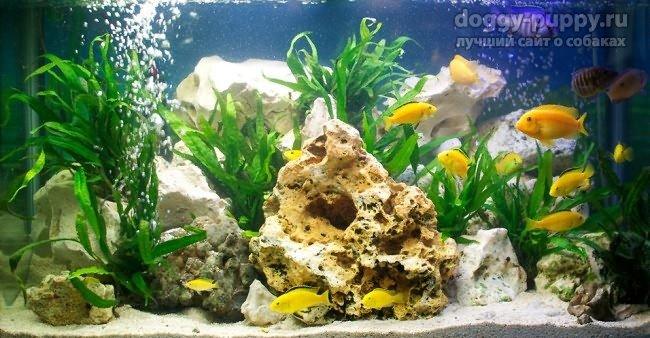 рыбки аквариум