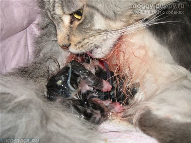 Роды у кошек и собак