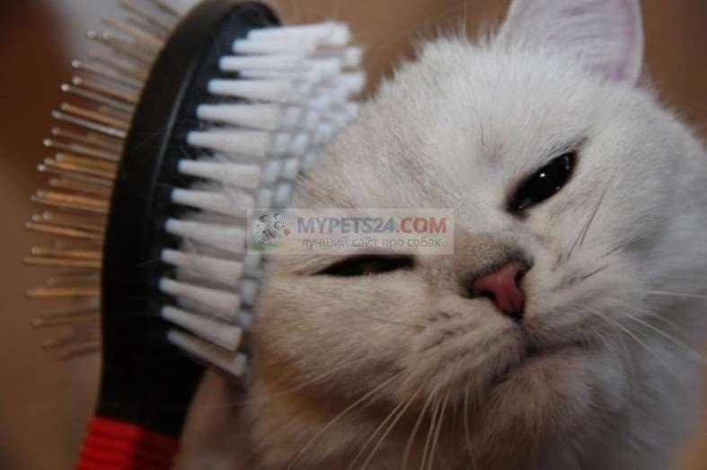 Как расчёсывать кота