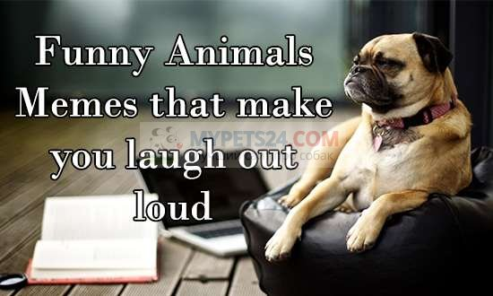 50 Funny Dog Memes You Never Seen before. Funny Dog Jokes and Dog Pictures