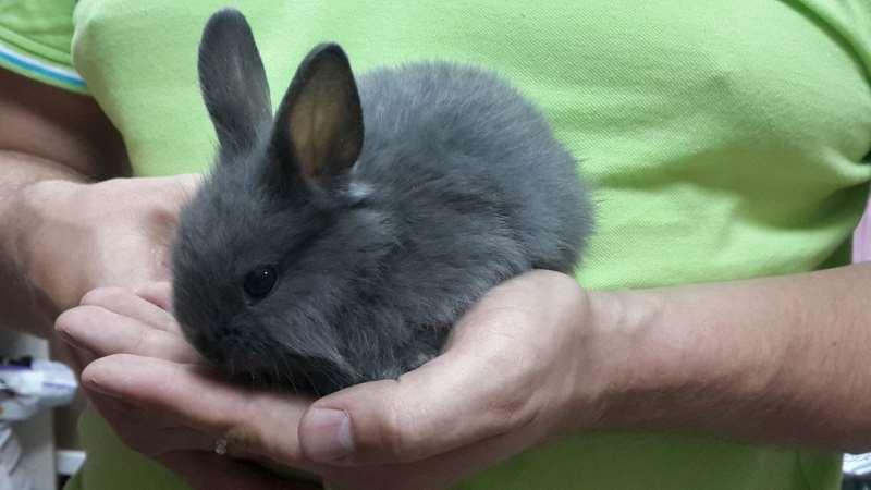 декоративные кролики фото