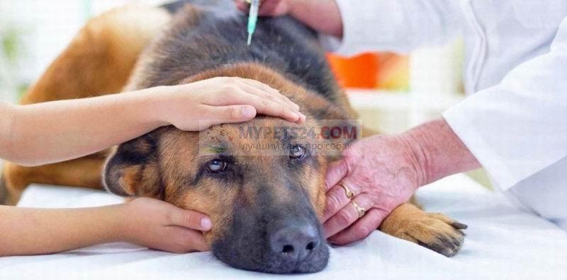 Усыпление собак: показания и особенности процедуры