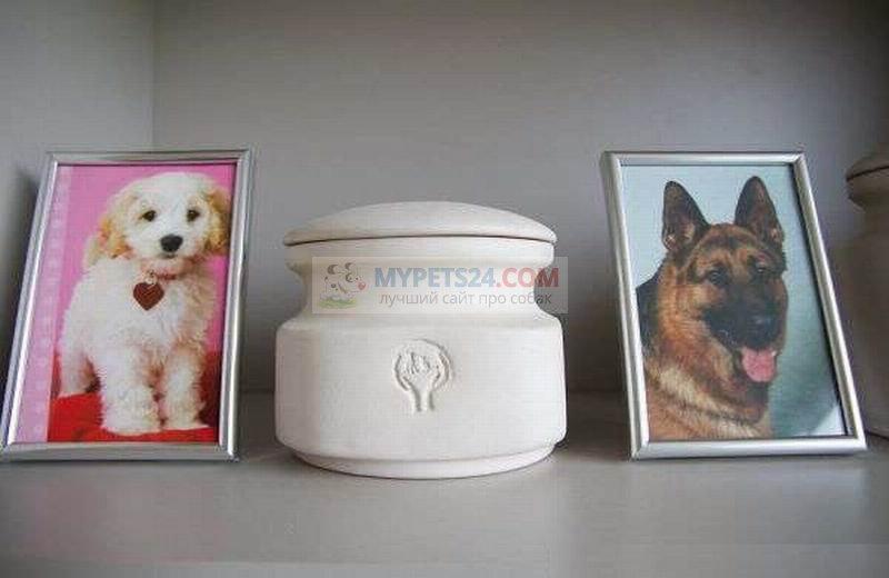 Кремация собак: как проводить питомца на радугу?