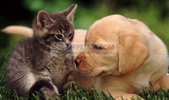Собаки и кошки в жизни человека