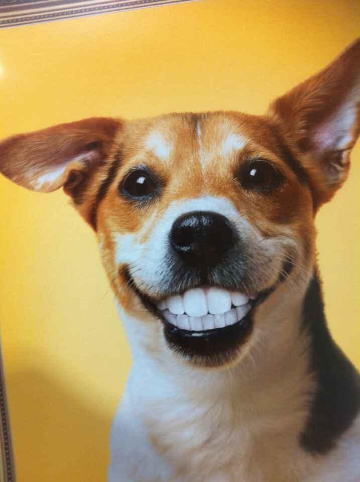 Самые смешные собаки. Фото