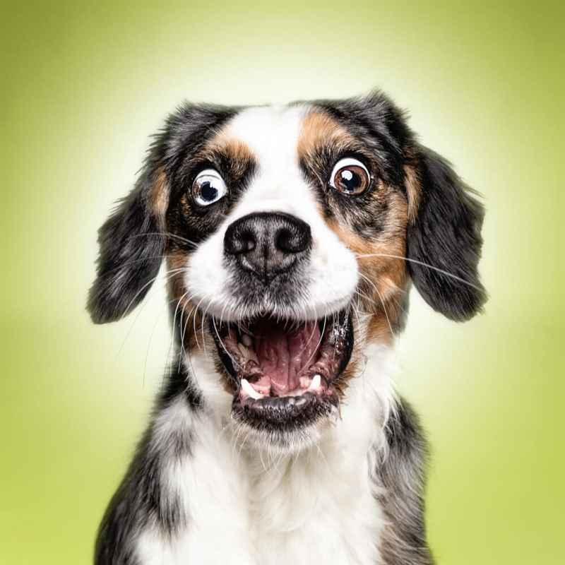 Самые смешные собаки