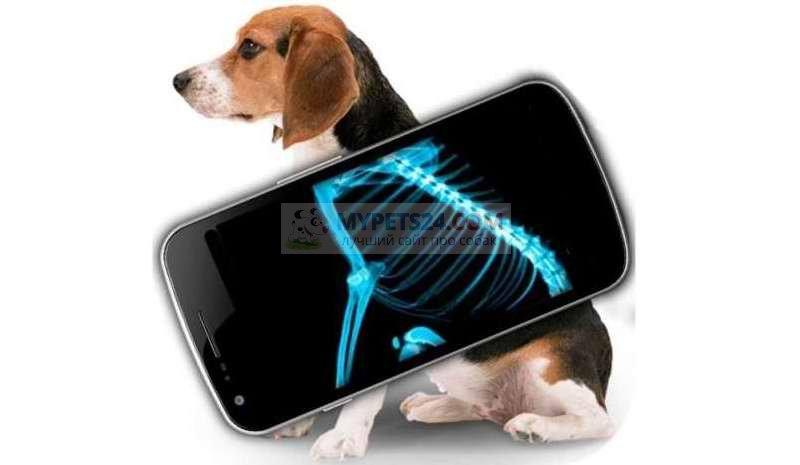Рентген собаки. В каких случаях необходим?