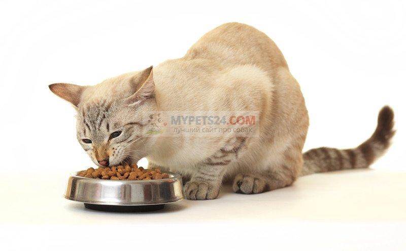 Какой корм выбрать для кошки? Советы и рекомендации