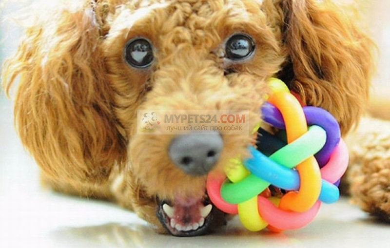 Развивающие игрушки для собак: предназначение и разновидности