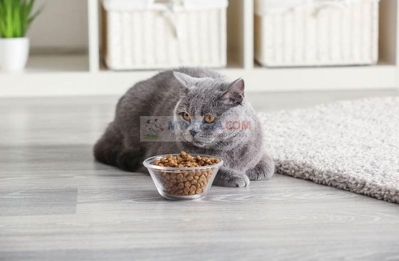 Как правильно кормить кошку? Полезные советы