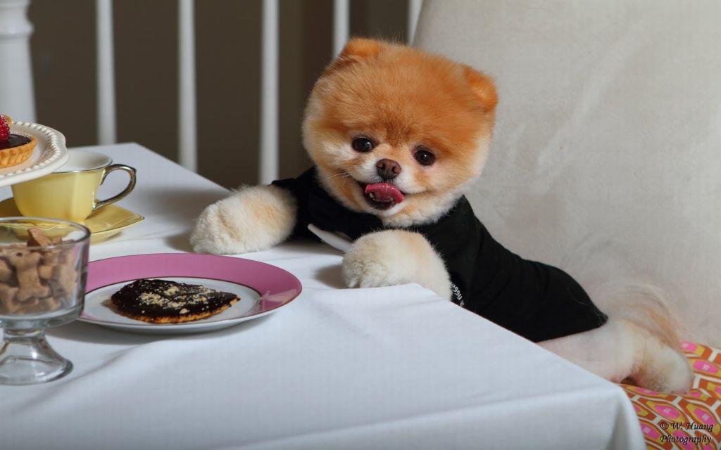 еда для маленьких собак