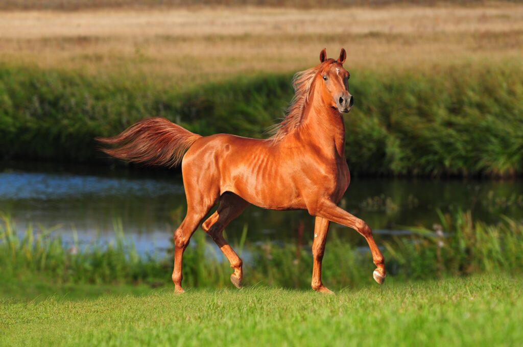 лошадь сонник