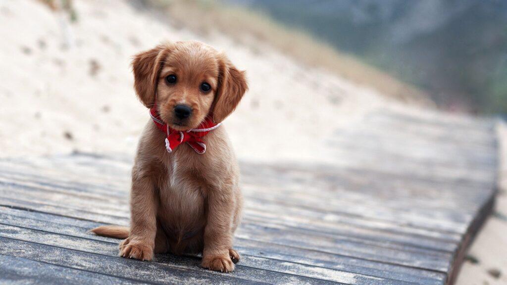 стиъотворение собака