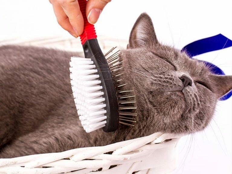 расчёсывание кота 2