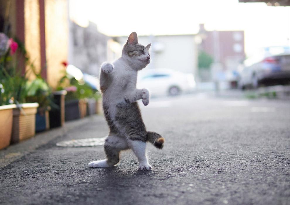 Очень веселые фото или картинки танцующих котов