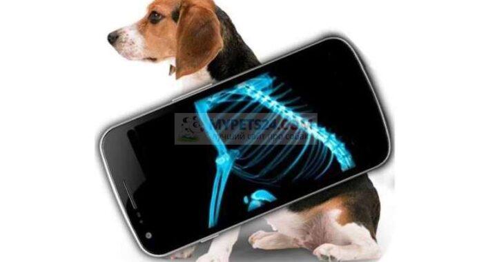 рентген собаки