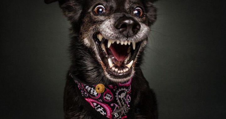 смешные фото собак5