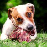 сырая пища для собак