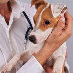 аллергия у собаки что дать