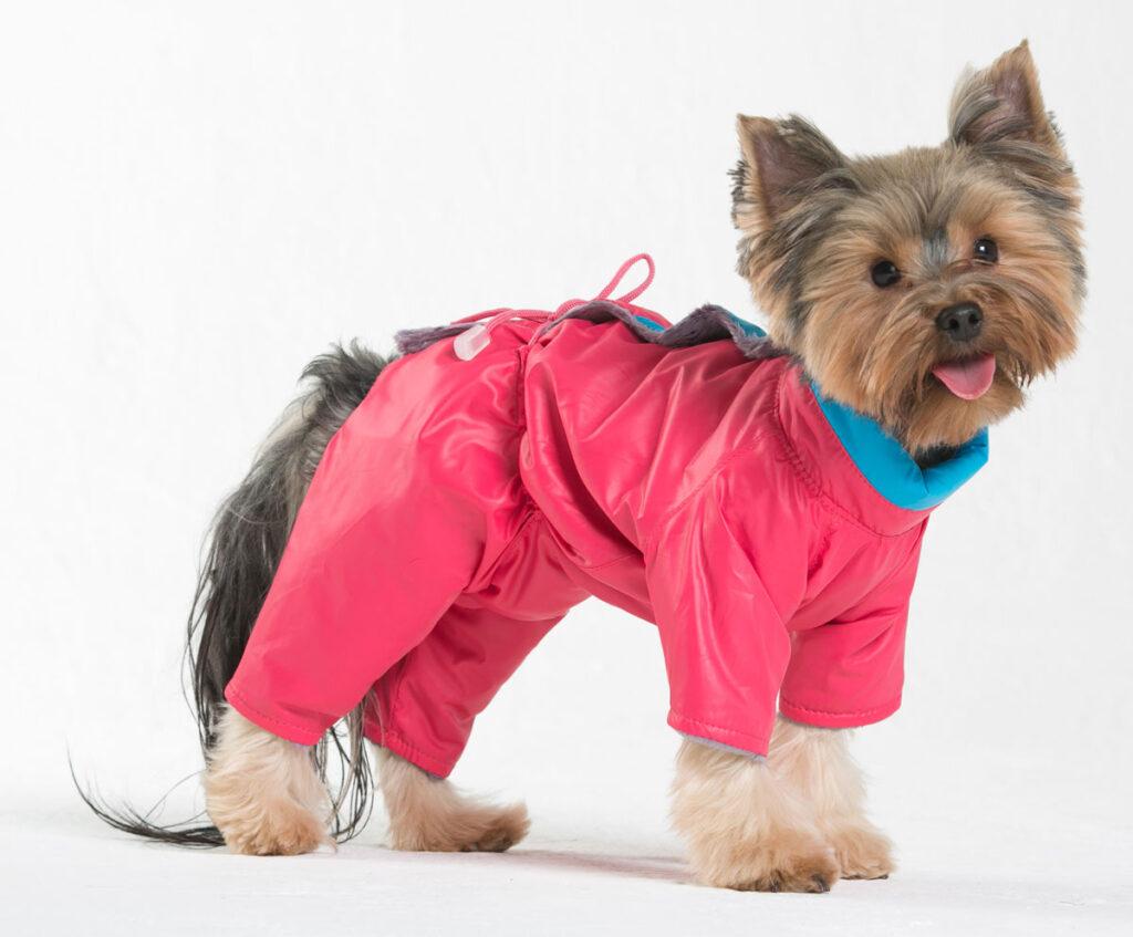 одежда для маленьких собак 2
