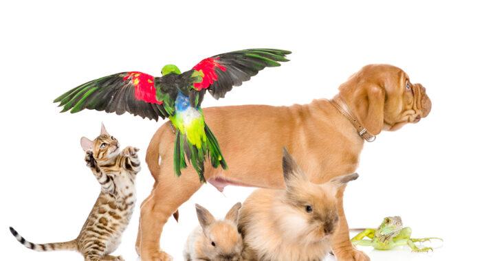 питомник птиц и грызунов