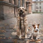 Что выбрать в качестве поводка или вместо него для собаки?