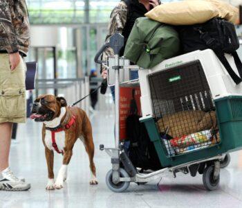 в поездку с собакой и багажом