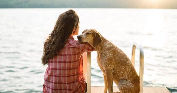 любимая собака
