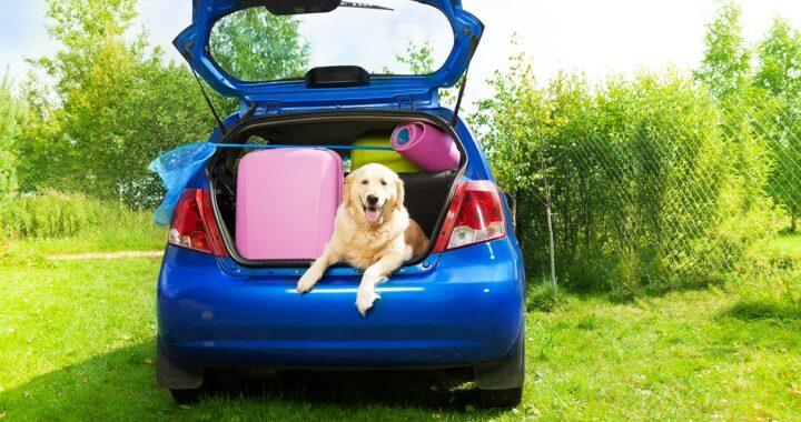 Dog and bags and other luggage in the trunk of the car on the back yard ready to go for vacation