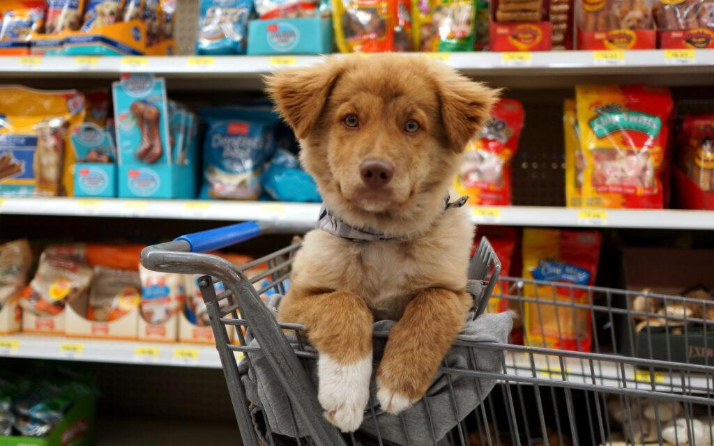 зоомагазин с собакой
