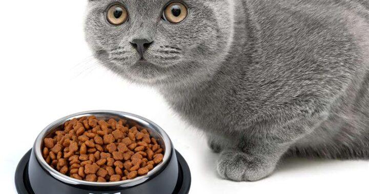 корм для британской кошки советы