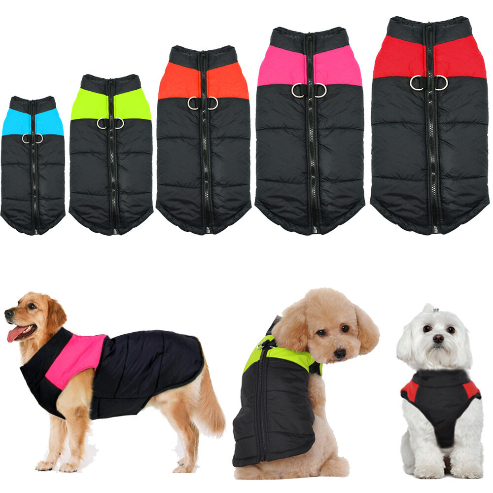 одежда для собак разного размера как выбрать