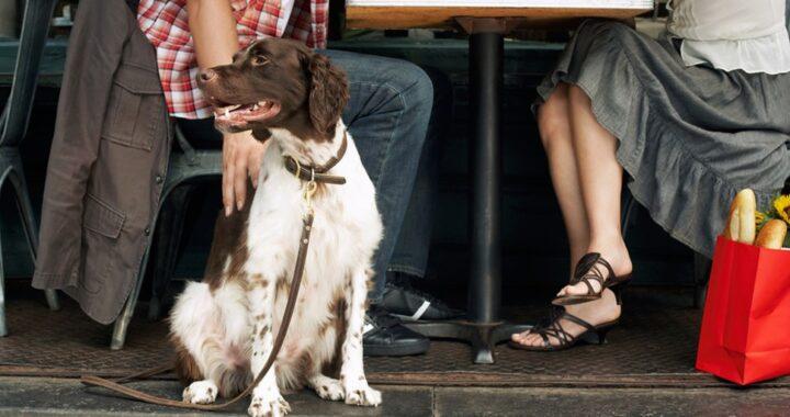собака в ресторане
