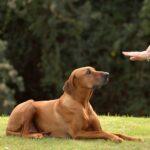 Советы по воспитанию собаки