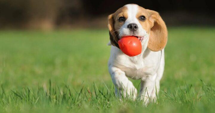собака с мячем