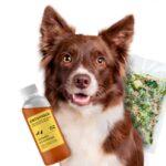 Почему собакам важно давать натуральный корм