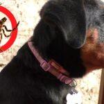 Клещи и блохи. Инсектоакарициды для кошек и собак