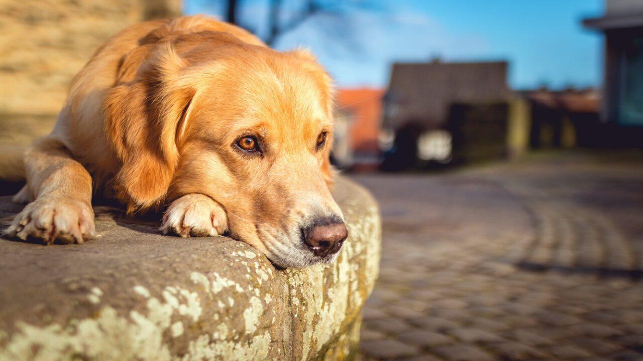 собака грустит почему причины