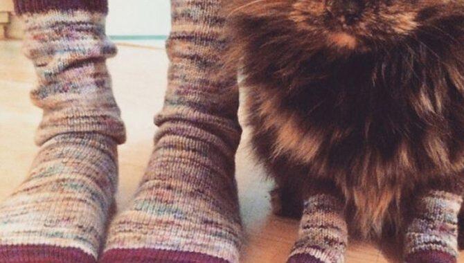 носки и кошка