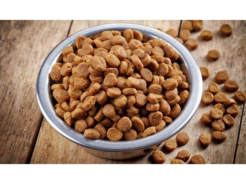 сухой корм для собак как выбрать