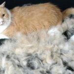 Почему у домашней кошки сильно лезет шерсть: что делать, причины выпадения и лечение в домашних условиях