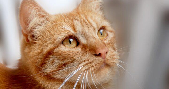 cat-gf2e89f079_1280